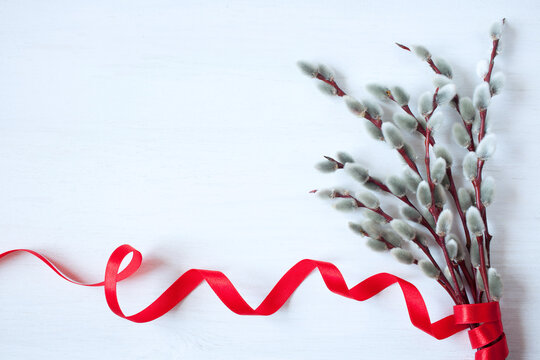 A bouquet of blossoming pussy willow and a red ribbon on a white background. Congratulations to Easter, Palm Sunday, space for text.