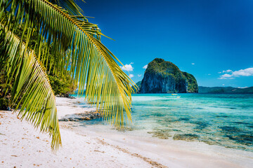 Palm Tree At Beach Against Blue Sky