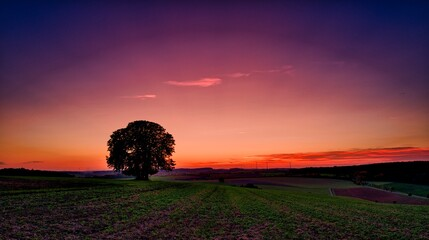 Scenic View Of Field With Trees Against Sky During Sunset