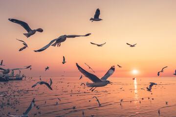 Fototapeta Flock Of Birds Flying In The Sky