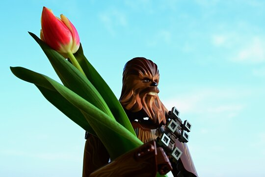 LEGO Star Wars large action figure of wookie Chewbacca, also called Chewie, holding real fresh orange to yellow tulip in his hands, blue skies in background.