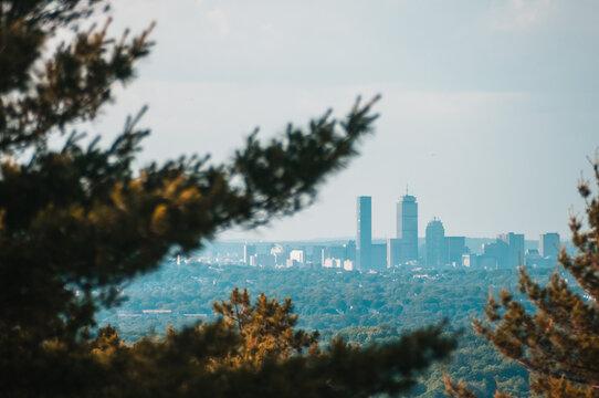 Boston Skyline Through The Trees