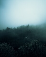 Aerial eerie view of a thick forest in a foggy day
