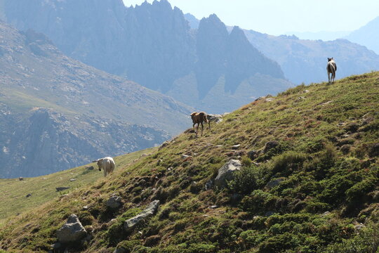 View Of A Horse On A Mountain