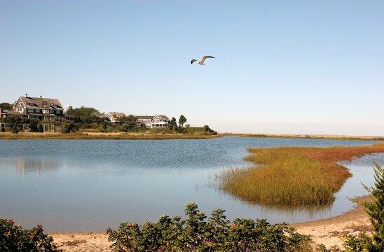 Seagull Flying Over Marthas Vineyard In New England.