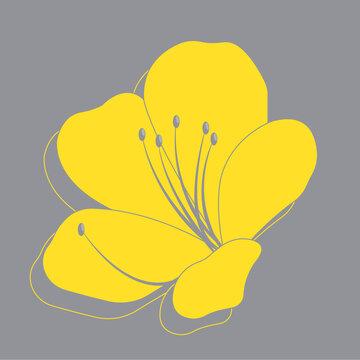 Yellow illuminating azaleas flower on ultimate gray background