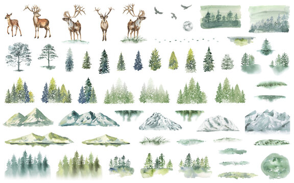 Watercolor Forest tree illustration. Mountain landscape. Woodland pine trees. Green Forest. Deer.