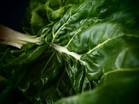 Mangold Beta vulgaris. Biennial herb, a subspecies of common beet. Fortified green lettuce leaves. Vegetarian or healthy food. Washed chard. Fresh harvested swiss chard from an organic farm macro shot