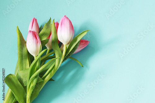 beautiful pink tulip flowers on pastel blue background, mother day template, mockup with flowers