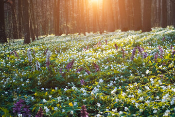 Wall Mural - Fantastic forest with fresh flowers in the sunlight.