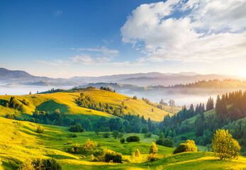 Wall Mural - Great countryside landscape in morning light. Location place Carpathian mountains, Ukraine, Europe.