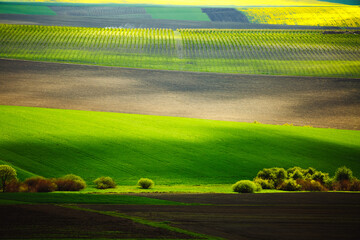 Wall Mural - Splendid view on of sunlit wavy fields of agricultural area.