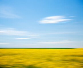 Wall Mural - Bright yellow canola field and blue sky on a sunny day.