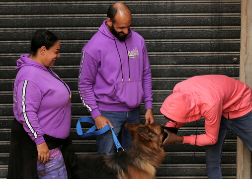 A man touches a dog as Bahaa Magdy and his wife Hebatallah Adel, members of 'Aleefcom paxi for pets transport', picked it up in Cairo