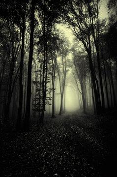 road through dark forest at night, creepy halloween landscape