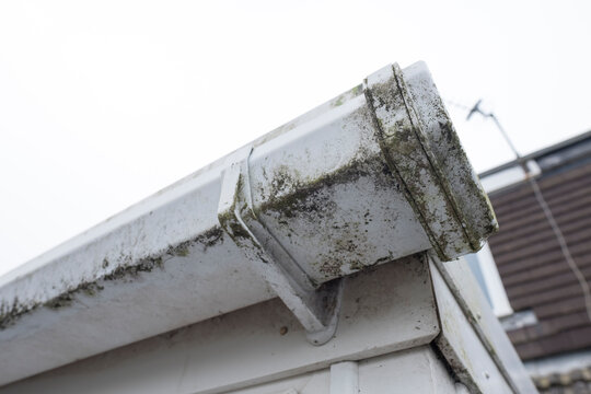 Dirty clogged white plastic pvc gutters and drain pipes with mossy green mould on plastic fascias.  Blocked drains and guttering need window cleaners and regular yard  maintenance for good drainage.