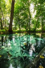 Fototapeta Źródła w Dłubniańskim Parku Krajobrazowym