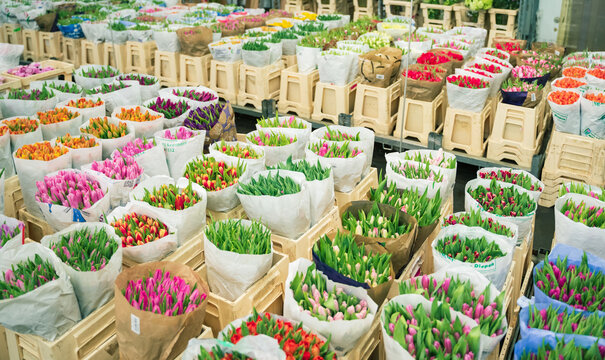 Wholesale floristic base, shop with flowers for Valentine's Day on February 14, International Women's Day on March 8. Natural fresh multi-colored tulips, roses red,pink,yellow,orange.Holiday shopping