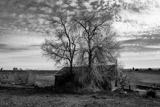 Old Barn in the Yakima Valley, WA