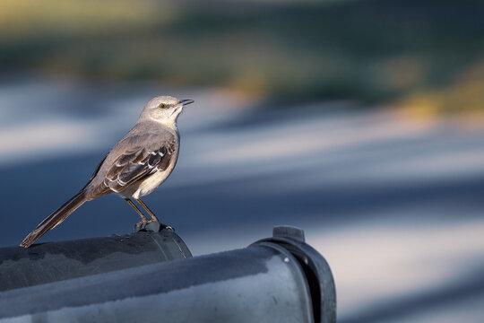 Little Bird on a Mailbox