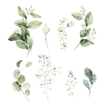 Watercolor floral set. Hand painted illustration of forest herbs, greenery, baby breath. Green leaves, gypsophila isolated on white background. Botanical illustration for design, print