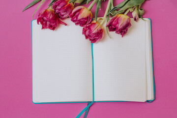 Opened blue notebook with tulips on a pink background. Education concept. Spring. Wall mural