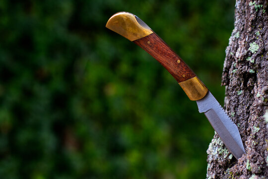 Hunting Knife Stuck in a Tree