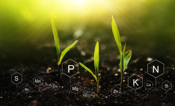 Plants on  sunny background with digital mineral nutrients icon. Fertilization and the role of nutrients in plant life.
