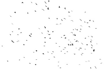 A flock of birds isolated on a white