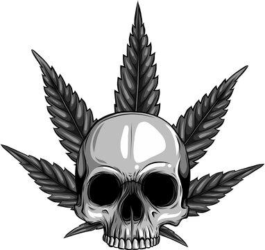 design of skull with leaves marijuana head illustration