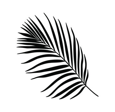 Palm Tree Leaf Black Silhouette Vector Drawing.Tropical leaves stencil shadow isolated on white background. Posters, Cards, Photo,Overlay, Print, Vinyl wall sticker decal. Plotter laser cutting file.