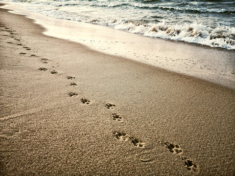 traces of a dog on a beach