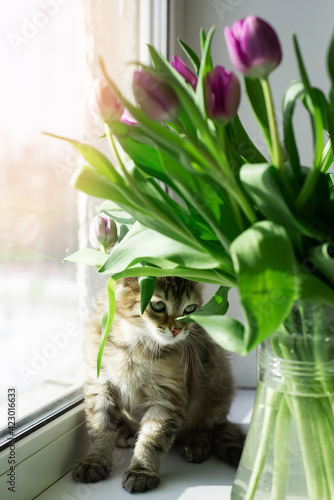 Background: a bouquet of tulips and a kitten on the window. The concept of spring, holiday, mother's day.