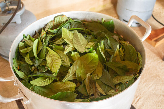 ayahuasca tea-shaped pot