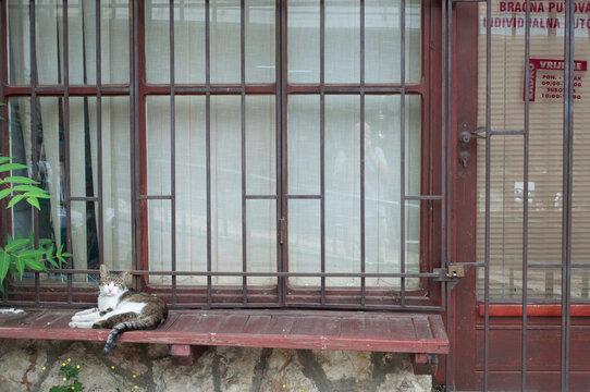 Cat Portrait in Sarajevo Old Town