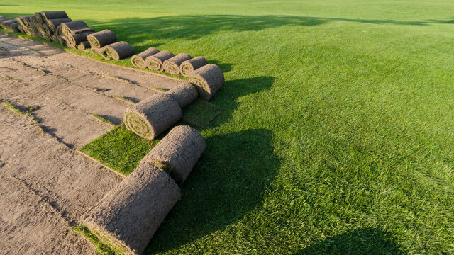 Rolls of lawn grass on a golf course in a park on a sunny day, against a background of pine trees. Wide frame