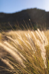 Close up of tall grass in sunlight in mountain countryside