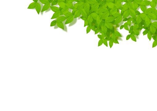 葉っぱの素材