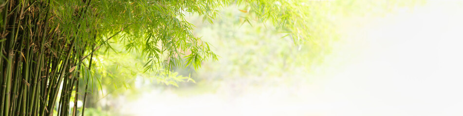 Nature of green bamboo tree in forest using as background bamboo leaves cover page