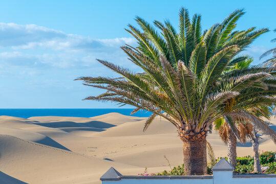 Sunrise over sand dunes at Maspalomas, Gran Canaria, Canary Islands, Spain