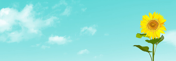 Sunflowers, blue sky and realistic clouds. vector illustration, graphic, summer, web header, footer, banner, copy space, landscape