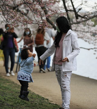 A woman stands with a child as she jumps to touch the blooming cherry blossoms by the Tidal Basin in Washington