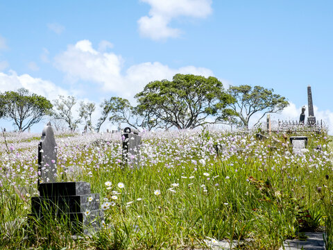 Old cemetery with spring flowers