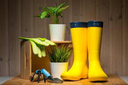 gardening, farming and planting concept - garden tools, flower seedlings and rubber boots on wooden background