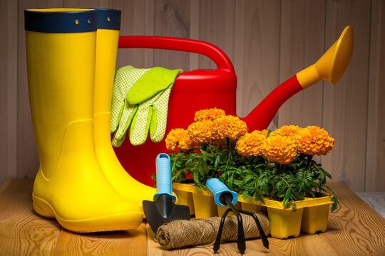 spring concept, gardening tools for gardening, rubber boots and seedlings, watering can, seasonal garden work.