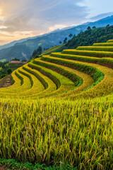 Green terraced rice fields in rainny season at Mu Cang Chai