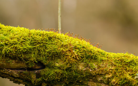 fallen tree trunk covered with moss with branch growing up from the middle