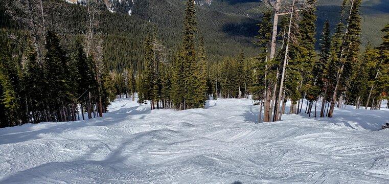 The mogul ski runs in the forest at Nakiska Ski Slope at Kananaskis Alberta Canada