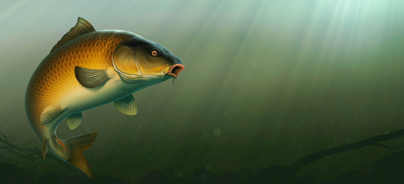 Carp fish (koi) realism isolate illustration. Fishing for big carp, feeder fishing, carp fishing. Carp underwater at the bottom of a river or lake.