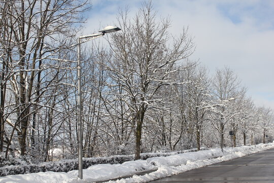 Snow covered trees during bright winter day next to the train station of Hechingen, Baden-Württemberg, Germany. The place, where you can take a bus to Hohenzollern Castle.